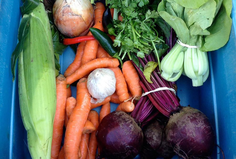 Ice Cap Organics CSA Vegetable Box