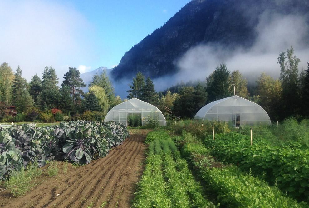 Ice Cap Organics Farm